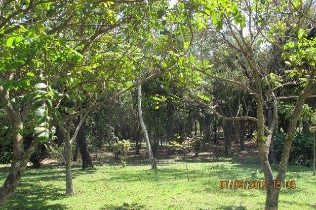 Sítio em Mineiros do Tietê com 3 alqueires - com ampla casa e área de lazer - produtivo - Foto 20