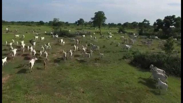 VENDA | Fazenda, em ZONA RURAL, CORUMBÁ - Foto 3