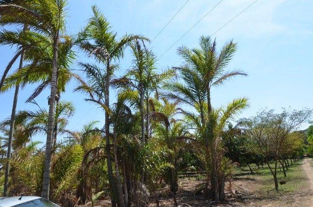 Sítio em Mineiros do Tietê com 3 alqueires - com ampla casa e área de lazer - produtivo - Foto 9