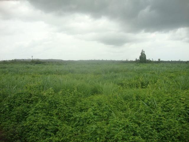 80 km do asfalto, Itinga-MA. 221 alqueires - Foto 7
