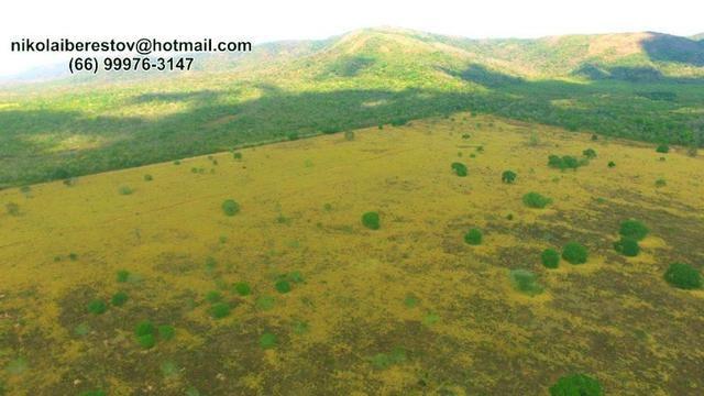 Fazenda 500 hectares nordeste mt nikolaiimoveis