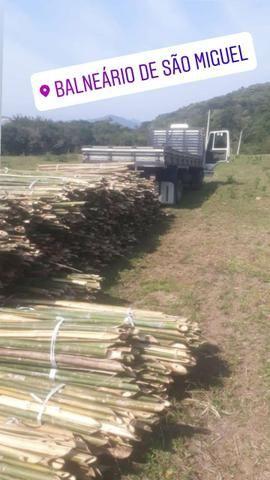 Bambu - Foto 6