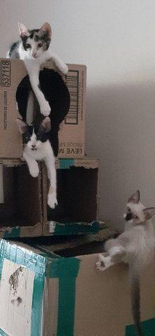 Doação Responsável de gatinhos! - Foto 4