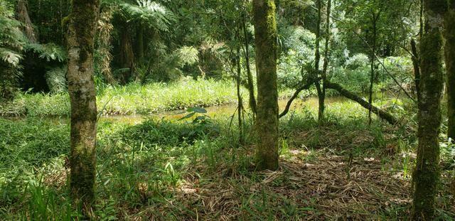 Chácara Agudos do Sul - 50 mts da Br c/ Tanque e rio - Foto 17