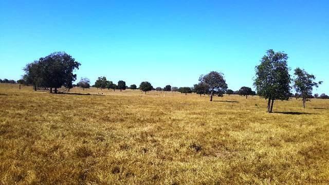 Fazenda 1485 ha Barra do Bugres MT - Foto 4