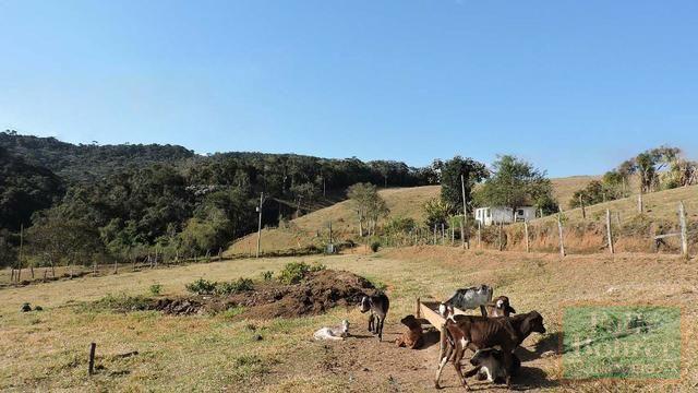 Fazenda com 588,71 hectares, situada na estrada Friburgo-Teresópolis, na altura de Vieira - Foto 18