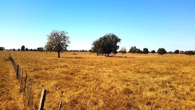 Fazenda 1485 ha Barra do Bugres MT - Foto 12