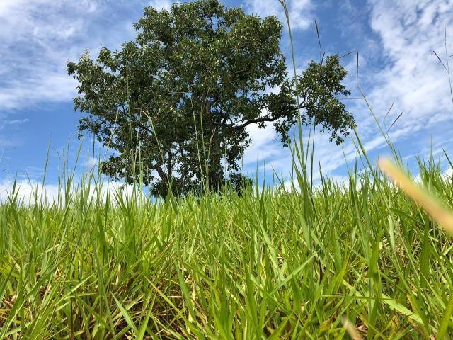 Fazenda em Bela Vista de Goiás de 15 Alqueires, à 45 km de Goiânia Dentro da Cidade - Foto 15
