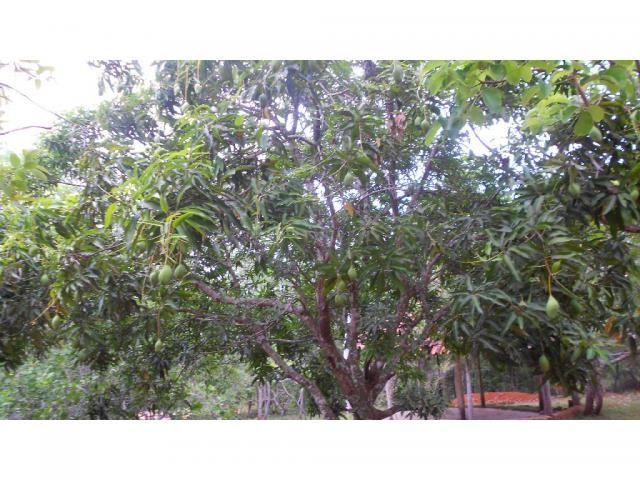 Chácara à venda em Zona rural, Chapada dos guimaraes cod:20937 - Foto 8