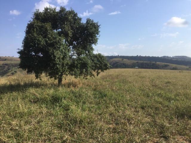 Fazenda 455.96 hectares - Governador Valadares/MG - Foto 14