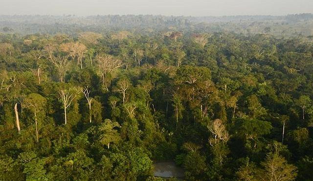 5000.000 de credito de carbono, a 10,00 dólares a tonelada - Foto 2