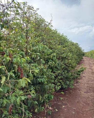 Sítio em Araguari - MG com 21 hectares - Foto 6