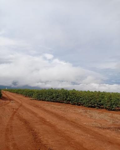Sítio em Araguari - MG com 21 hectares - Foto 3