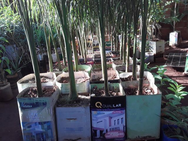 Vendas de mudas e plantas para jardim e chacaras - Foto 5
