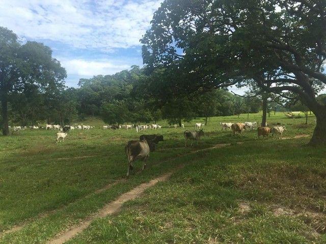 Fazenda Na Região da Agrovila  - Foto 5