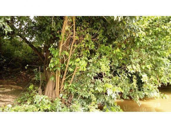 Chácara à venda em Zona rural, Nossa senhora do livramento cod:13185 - Foto 13