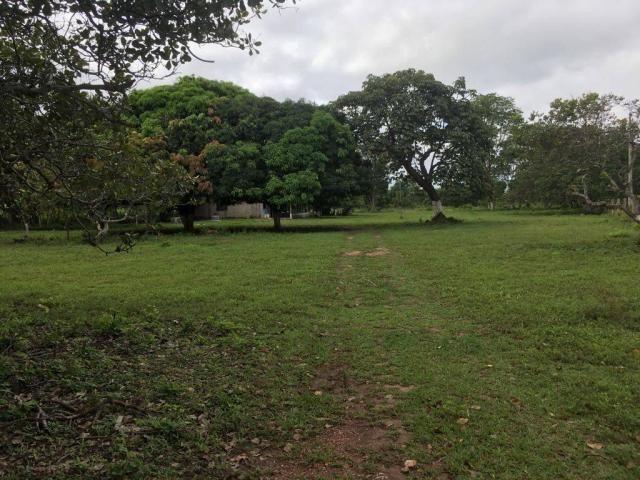 Chácara à venda em Zona rural, Cuiaba cod:21135 - Foto 6