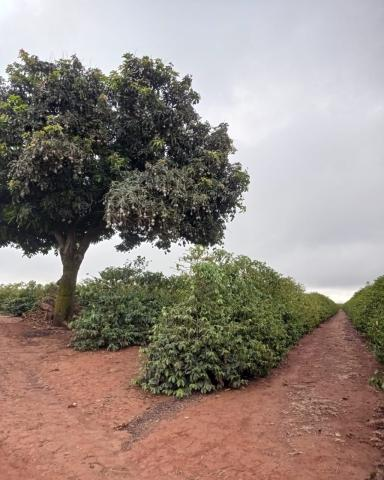 Sítio em Araguari - MG com 21 hectares - Foto 7