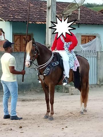 Cavalo alazão - Foto 2