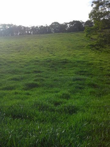 Fazenda 159,72 hectares - Leopoldina/MG; - Foto 14