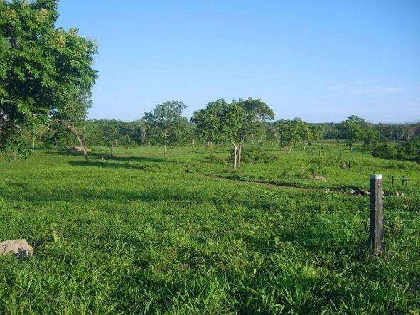 Chácara à venda em Zona rural, Nossa senhora do livramento cod:21342 - Foto 7