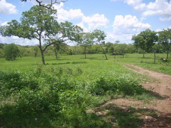 Chácara à venda em Zona rural, Nossa senhora do livramento cod:21342 - Foto 2
