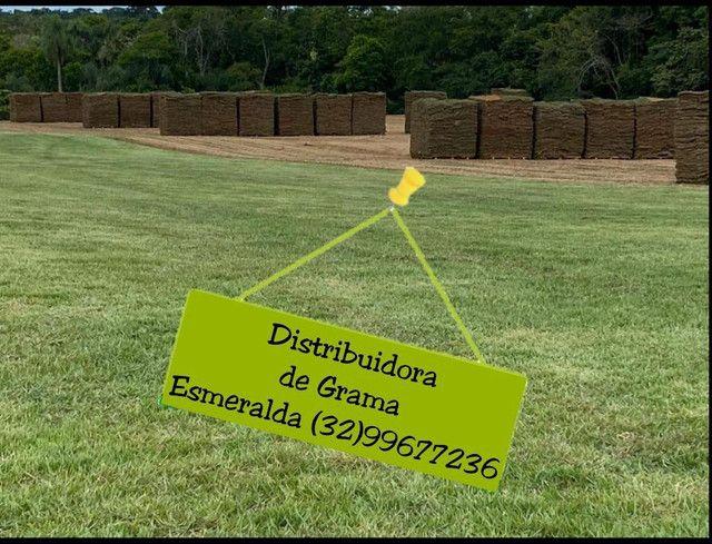 Grama esmeralda - Foto 3