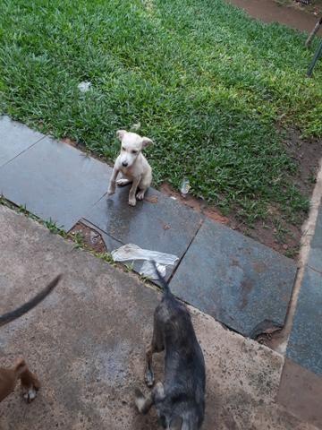 Doa se cachorrinho - Foto 3