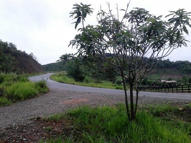 Terreno comercial as margens do asfalto - entrada + parcelas - Foto 5