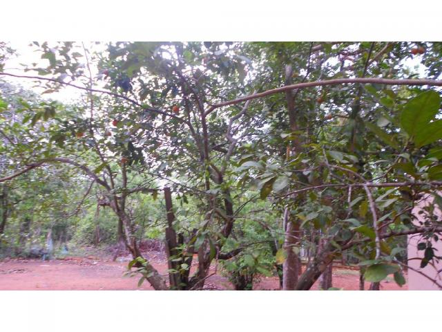 Chácara à venda em Zona rural, Chapada dos guimaraes cod:20937 - Foto 5