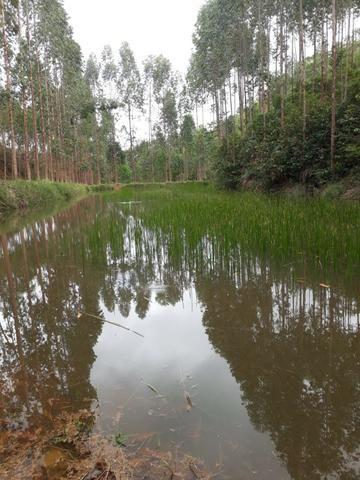 Fazenda 159,72 hectares - Leopoldina/MG; - Foto 11