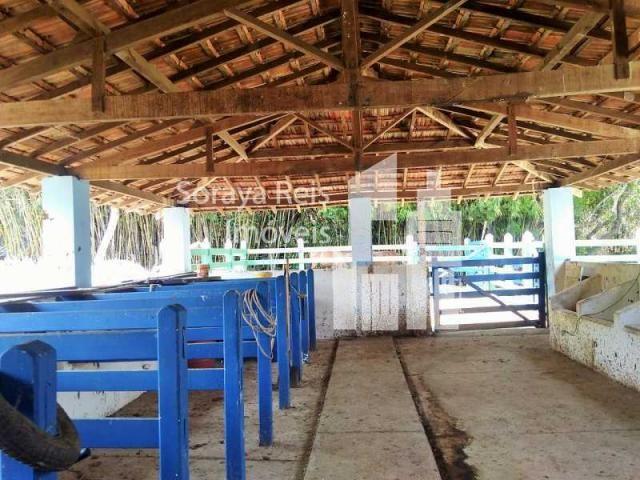 Chácara à venda com 4 dormitórios em Área rural de pará de minas, Pará de minas cod:820 - Foto 15