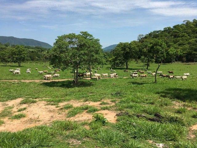 Fazenda Na Região da Agrovila  - Foto 9