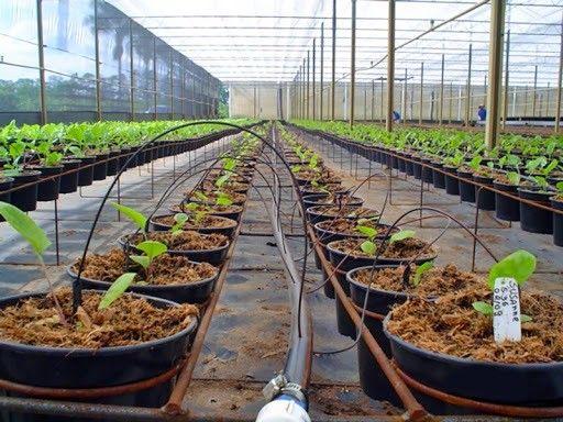 Mangueira de irrigação  - Foto 5