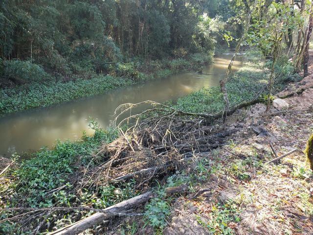 Chácara Agudos do Sul - 50 mts da Br c/ Tanque e rio - Foto 4