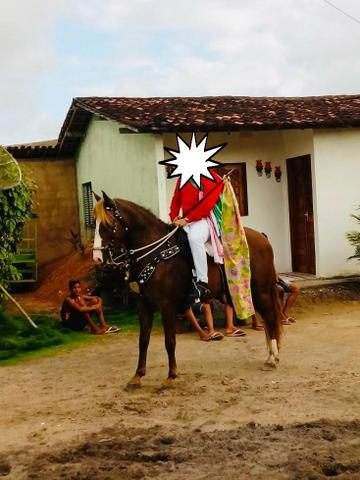 Cavalo alazão - Foto 3