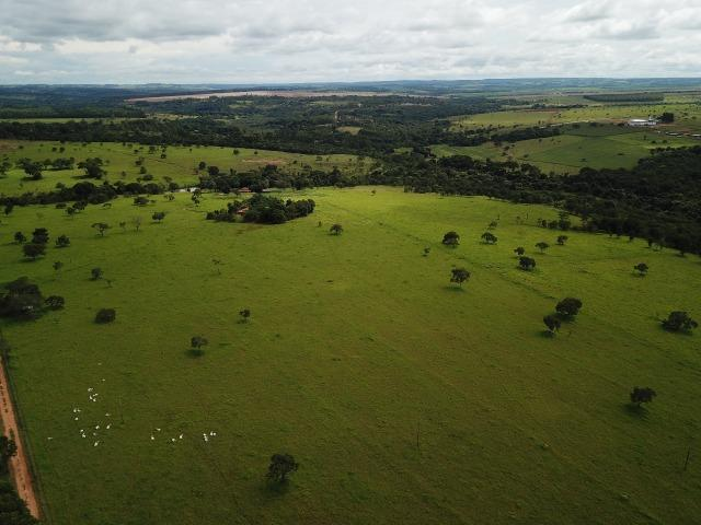 Fazenda em Bela Vista de Goiás de 15 Alqueires, à 45 km de Goiânia Dentro da Cidade - Foto 3