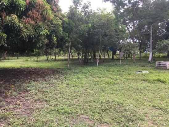 Chácara à venda em Zona rural, Cuiaba cod:21135 - Foto 12