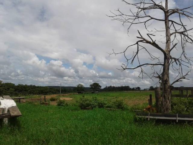 Chácara à venda em Rural, Nova mutum cod:22068 - Foto 15