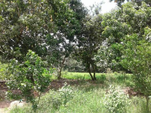 Chácara à venda em Rural, Nova mutum cod:22068 - Foto 18