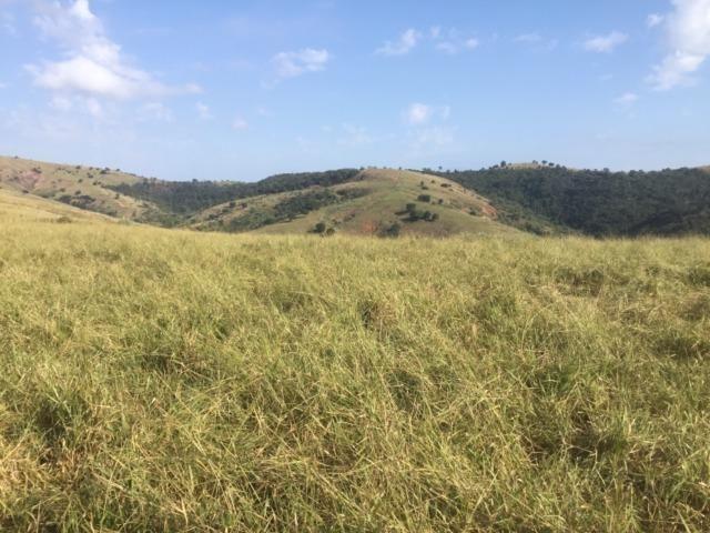 Fazenda 455.96 hectares - Governador Valadares/MG - Foto 18