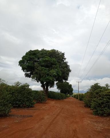 Sítio em Araguari - MG com 21 hectares - Foto 8
