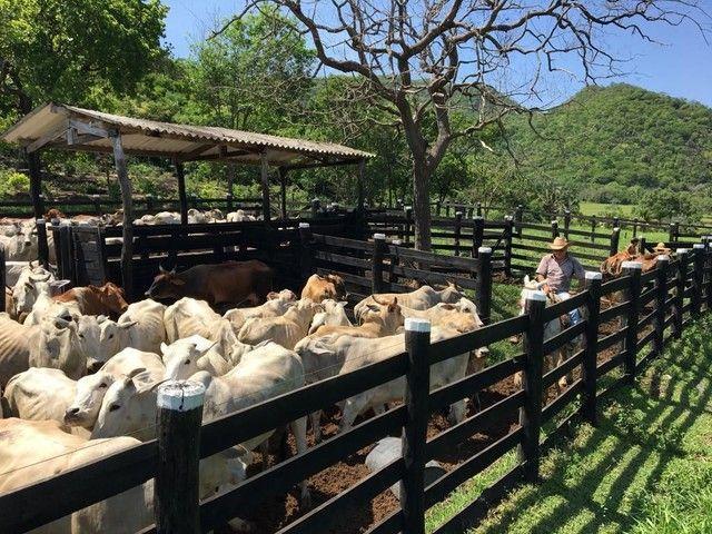 Fazenda Na Região da Agrovila  - Foto 19