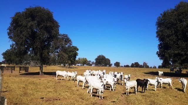 Fazenda 1485 ha Barra do Bugres MT - Foto 7