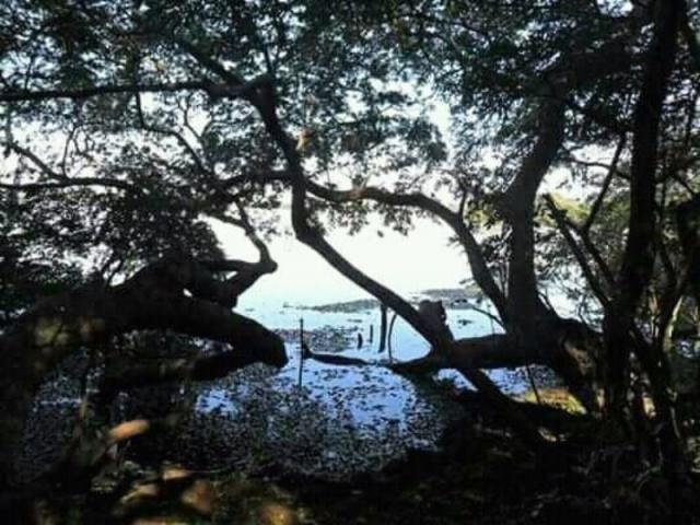 Sítio 3,0 hectares - porto batista - triunfo - rs - Foto 4
