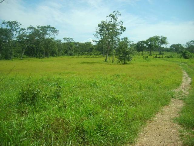 Chácara à venda em Zona rural, Nossa senhora do livramento cod:21342