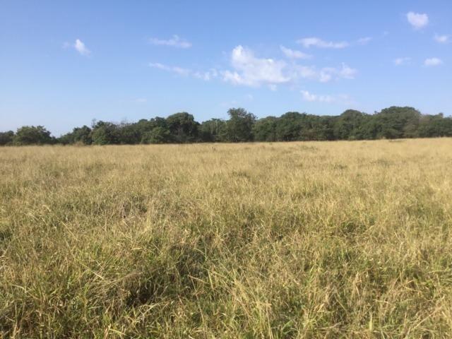 Fazenda 455.96 hectares - Governador Valadares/MG - Foto 11