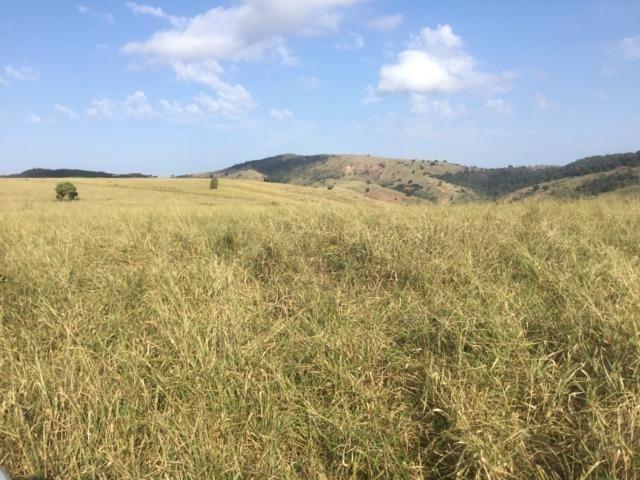 Fazenda 455.96 hectares - Governador Valadares/MG - Foto 20