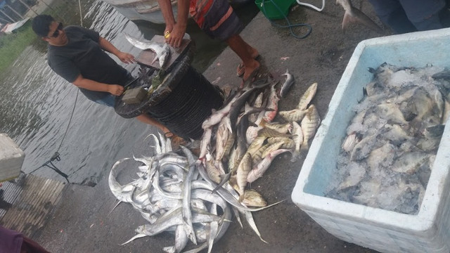 Pescaria em Guaratuba - Paraná