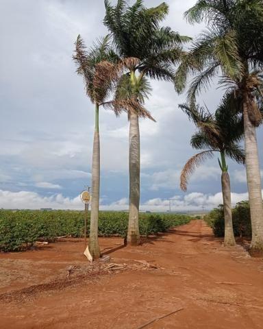 Sítio em Araguari - MG com 21 hectares - Foto 2